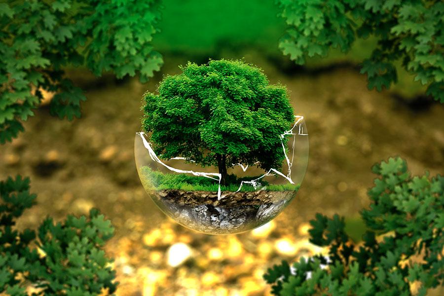 Manger bio pour la planète